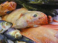 Frischer Fisch - Hamburger Fischmarkt - Bilder aus Hamburg Altona.
