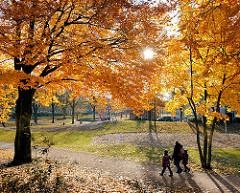 Indiansummer in Hamburg - Bäume mit farbenfroher Herbstfärbung im Lohmühlenpark in Hamburg St. Georg - die Sonne strahlt durch das dichte Herbstlaub - Gegenlichtaufnahme.