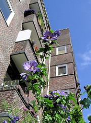 Violette Stockrosen - Ziegelfassade im Innenhof des Otto Stoltenblocks in der Hamburger Jarrestadt.