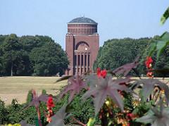 Stadtpark in HH-Winterhude - grosse Wiese mit Plantetarium - blühende Rizinuspflanzen im Vordergrund.