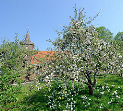Wiese mit blühenden Obstbäumen und Narzissen vor der Neuenfelder Pfarrkirche St. Pankratius.