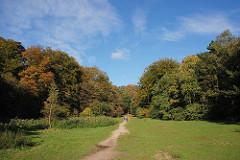 Herbst im Niendorfer Gehege - rot gefärbtes Herbstlaub an den Bäumen - Trampelpfad über eine Wiese.
