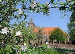 Pfarrkirche St. Pankratius - blühende Apfelbäume auf der Wiese.