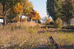Stillgelegte Gleisanlagen - überwaschsene Gleise Bahnanlage in der Liebigstrasse von HH-Billbrook.