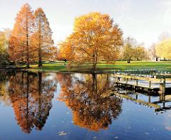 Herbst in der Hansestadt Hamburg - Sumpzypressen in den Wallanlagen.