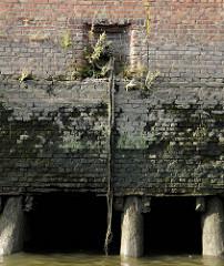 Ziegelmauer / Kaimauer im Hamburger Hafen; aus den Mauerritzen wachsen Gräser und Pflanzen. Eisenring mit alten Leinen auf den verwitterten Steinen. Bei Niedrigwasser zeigen sich die Baumstämme, die das Fundament der Kaianlage bilden.