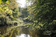 Dicht bewachsenes Ufer der Alster - Bäume und Wald am Alsterufer in Hamburg Lemsahl Mellingstedt.