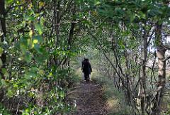 Schmaler Pfad durch das Naturschutzgebiet - Wandern im Duvenstedter Brook.