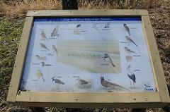 Übersichtstafel mit Vogelbestand / der Vogelwelt im Naturschutzgebiet Kirchwerder Wiesen.