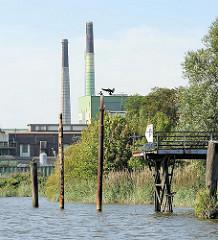Anleger am Müggenburger Kanal - das Schilf wächst am Ufer des Industriekanals auf der Peute in Hamburg Veddel - hohe Industrieschornsteine im Hintergrund.