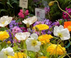Biohof Gut Wulksfelde - Bauernmarkt. Aussteller präsentieren ihre Bioprodukte und Kunsthandwerk.  Blumenstand mit blühenden Pflanzen.