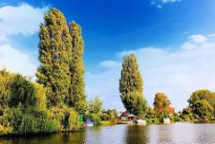 Kleingärten am Ufer des Industriekanals Bullenhusener Kanal - Kleingärten auf der Billeinsel - hohe Pappeln am Wasser.