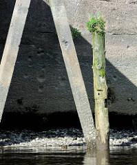 Alte Anlegestelle mit Betonpfeiler und Kaimauer im  Rosskanal vom Hamburger Hafen;  bewachsener verwitterter Holzdalben.