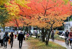 Ufer der Alster - Rundweg unter Herbstbäumen in der Sonne.
