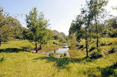 Wiese mit wassergefüllter Senke im Hamburger Naturschutzgebiet Höltingbaum - die frei laufenden Rinder nutzen sie als Tränke.