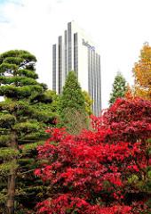 Rote Herbstblätter Japanischer Ahorn - Hotel Radisson Blue - Hotelhochhaus, 1973 fertig gestellt - Architekten Schramm + Pempelfort.