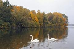 Schwäne auf dem Öjendorfer See - Öjendorfer Park mit herblich gefärbten Bäumen.
