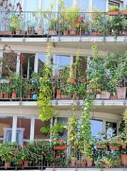 Hängende Gärten - Grünpflanzen auf Balkons im Stadteil Hamburg Sternschanze.