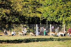 Damwild und Eltern mit ihren Kindern am Zaun des Wildgeheges im Niendorfer Gehege.