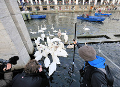 Zusammentreiben der Alsterschwäne bei der Rathausschleuse - die Schwäne werden von Mitarbeitern des Hamburger Schwanenwesens in die Rathausschleuse gebracht, dort in Boote verladen, die die Tiere zum Eppendorfer Mühlenteich bringen.