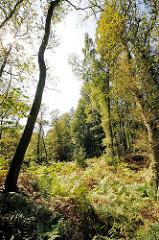 Fotos aus dem Naturschutzgebiet Höltingbaum / Stellmoorer Tunneltal - der Boden ist dicht mit Farn bedeckt.