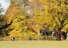 Herbstlich gefärbte Bäume im Amsinckpark von Hamburg Lokstedt - Bezirk HH- Eimsbüttel; Wohnhäuser zwischen den Bäumen und dem Herbstlaub.