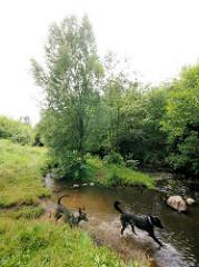 Hunde spielen im Wasser der Tarpenbek - Bilder aus Hamburg Niendorf.