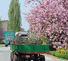 Trecker mit Anhänger im Hamburger Stadtteil Neuenfelde - Japanische Zierkirschen in Blüte.