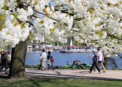 Hamburger Frühling, weisse Blüten der japanischen Zierkirsche - SpaziergängerInnen auf dem Alsterweg - Alstedampfer auf der Aussenalster.