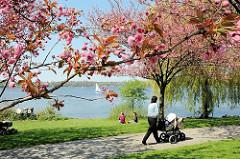 Frühling in Hamburg - Kirschblüte an der Alster - Japanische Kirschen blühen am Alsterufer - Spaziergängerin mit Kinderkarre in der Sonne.