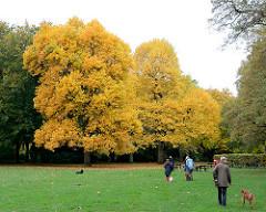Wiese im Hamburger Stadtpark - gelb gefärbte Herbstblätter.