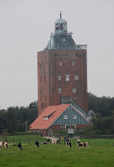 Kuhherde auf der Wiese - historischer Festungs- und Leuchtturm der Insel Neuwerk.