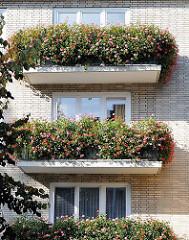 Balkons in einer Eilbeker Strasse - dicht mit Geranien / Balkonpflanzen bewachsen.