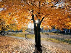 Herbst im Lohmühlenpark in Hamburg St. Georg - die Herbstsonne scheint durch die Bäume mit gelben Herbstblättern - Laub auf der Wiese - Spaziergänger.