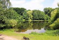 Bahrenfelder See - hohe Bäume stehen am Ufer, ein nasser Hund liegt im Gras.