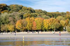 Bunte Herbstbäume am Ufer der Elbe - Elbstrand im Hamburger Stadtteil Rissen - Wittenbergen.