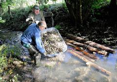 Gewässernachbarschaftstag des NABU an der Düpenau - Kies und Totholz wird in den Bach einbebaut, um die Lebensbedingungen für Tiere und Pflanzen zu verbessern. Bilder aus Hamburg Osdorf