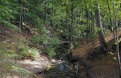 Lauf der Mellingbek durch den Wald.
