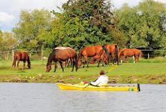 Herde Pferde auf der Weide in Hamburg Allermöhe - eine Kanutin fährt auf der Dove Elbe und blick auf die grossen Tiere, die auf der Wiese grasen..