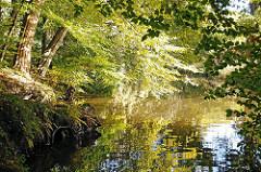 Lauf des Flusses Alster - tiefhängende Zweige über dem Flusslauf - Blätter spiegeln sich im Alsterwasser.