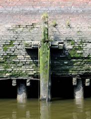 Alte verwitterter Holzdalben / Streichdalben an einer Kaimauer im Hamburger Hafen - der obere Teil istweggebrochen. Bei Ebbe sind die sind die Eichenstämme, die das Fundament der Kaianlage bilden zu sehen