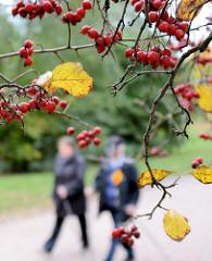 Spaziergänger im Herbst - Baum mit roten Früchten und gelben Blättern im Stadtpark Winterhude.