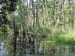 Bäume im Wasser der Alster - Überschwemmungsgebiet, Feuchtgebiet.