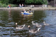 Grauganspaar mit Jungvögeln auf der Binnenalster; ein Pärchen rudert mit einem kleinen Schlauchboot auf dem Wasser.