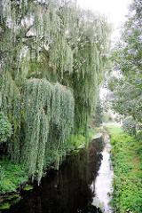 Entwässerungsgraben in Hamburg Neuland - grosse Weiden  stehen am Wasser.