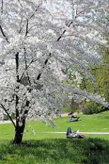 Weiss blühender Kirschbaum in der Grünanlage Planten un Blomen - ParkbesucherInnen liegen auf der Wiese in der Sonne.