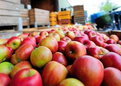 Geerntete Äpfel in Kisten gefüllt - im Vordergrund die Apfelsorte Braeburn