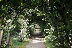Laubengang Linden im Wacholderpark. Grünanlagen in Hamburg Bezirk Hamburg Nord Stadtteil Fuhlsbüttel.