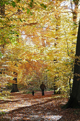 Herbstlaub auf dem Weg - Mischwald im Herbst - Hohenbuchen Park - Spaziergänge in der Herbstsonne.