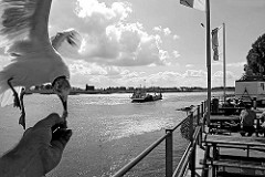 Hamburg Kirchwerder Zollenspieker, Fähre über die Elbe - Imbiss am Anleger.